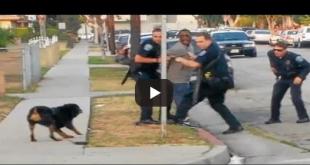 полицаи и куче