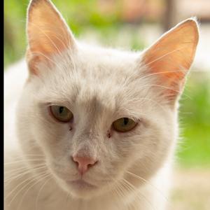 1 - Коте