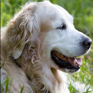 2 - Куче